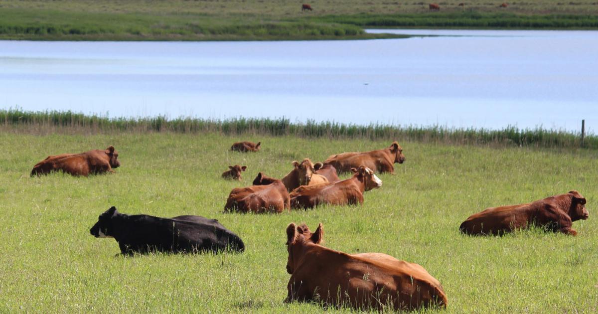 Parasite Control for Cow Calf Operations