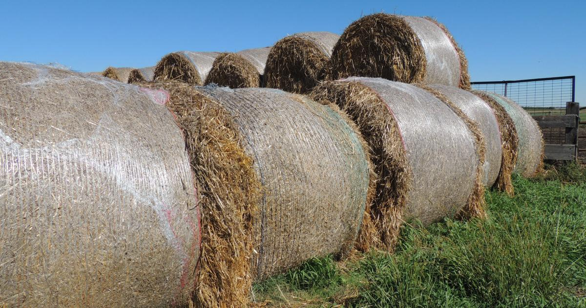 How Will You Make Hay This Year?