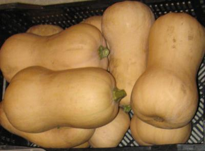 A small pile of tan-colored squash
