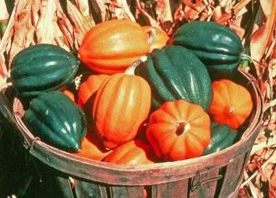 A basket of green and orange acorn-shaped squash.