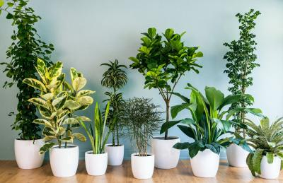 Four Benefits Of Houseplants,Budget Friendly Home Bar Ideas On A Budget