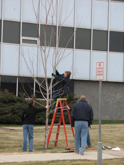 A group of three people pruning a tree.
