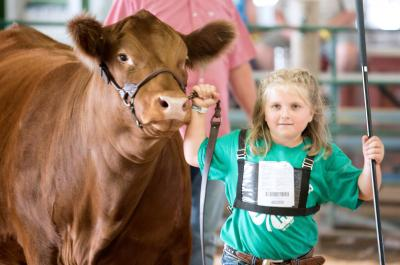 female 4-H youth showing a red cow