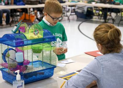 a young male 4-H youth showing a hamster to a judge