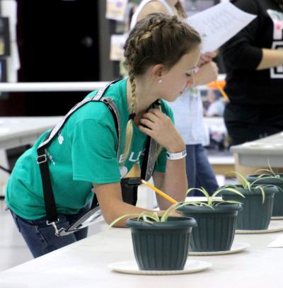 female 4-H youth inspecting a set of four potted plants on a table