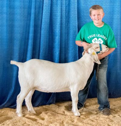 male 4-H youth standing with a white meat goat