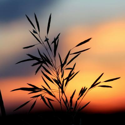 Silhouette of a plant against a blurred sunset background