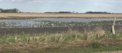 A corn field in South Dakota looking very wet due to flooding from spring rains and melted snow.