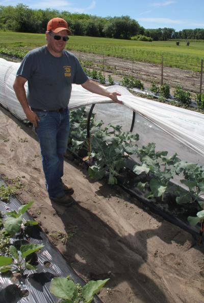 A man demonstrating a plastic, floating row cover above a row of garden plantings.