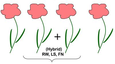A diagram of four hybrid plants produced from the two parent plants. The plants have pink flowers, long stems, and narrow leaves. (Traits are labeled: RW, LS, FN).