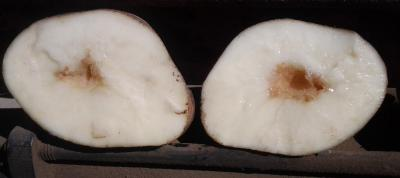 A potato split in half revealing a white inside and a brown, hollow core.