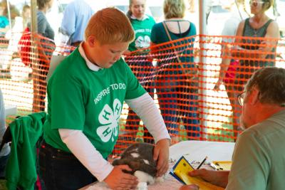 male youth wearing a green showing showing his rabbit project to a judge during the State Fair