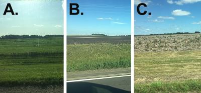 "Three South Dakota fields that claimed prevent plant. The first field is labeled ""A"" and is planted with a cover crop. The second field is labeled ""B"" and has no cover crops, but tillage was completed to control weeds. The third is labeled ""C"" and has no cover crops and weeds are growing throughout."