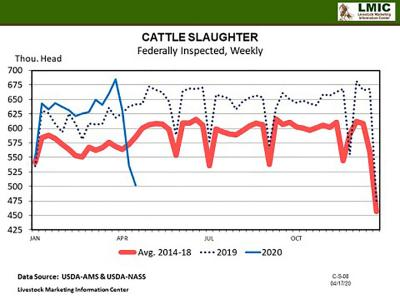 A line graph depicting weekly cattle slaughter numbers for 2019 and 2020 compared to industry averages from 2014-18. Most-recent April 2020 numbers show 500 thousand cattle per week compared to 630 thousand in 2019 and 575 thousand on average.