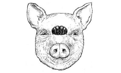 Illustration of a pig's head. There is a target mark on the pig's head between the eyes.
