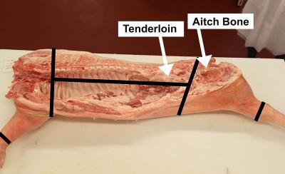 A pork carcass that has been cut in half. There are black lines demonstrating where to cut the carcass into its primal cuts. White arrows call out the tenderloin section and the aitch bone. For a complete description, contact SDSU Extension at: 605-688-4792