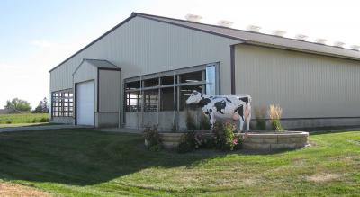 A statue of a dairy cow on a landscaped terrace in front of a long dairy barn.