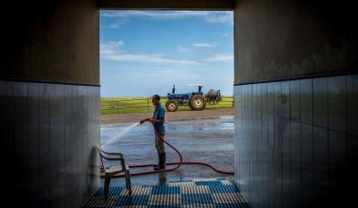 A dairy employee spraying down the entrance to a milking parlor with a high-pressure hose.