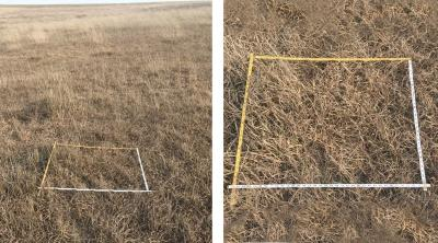 Two photos of dormant pasture with adequate residual cover.