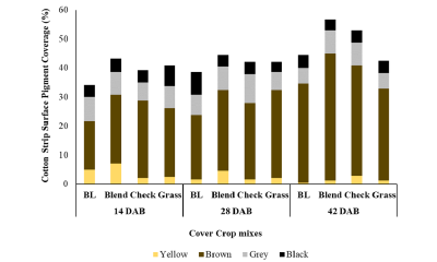 A stacked bar diagram. The y axis shows how much surface area (% of total surface) yellow, brown, grey and black pigments cover on the recovered strips' surface. The figure shows pigmentation patterns on the strip surfaces recovered after 14, 21, 28 days after burial (DAB) under broadleaf, blend, and grass cover crop mixes. Total pigment coverage ranges from about 35% under broad leaf mix at 14 DAB to 55% under blend 50-50 mix at 28 DAB. Brown pigment is dominant among all 4 pigments on the strip surfaces.