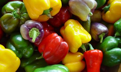 A colorful variety of freshly, harvested bell peppers.