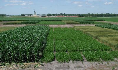 Several variety trial plots for different crops.
