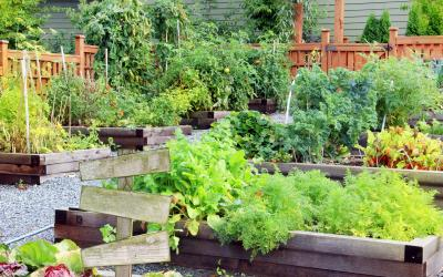 fruit and vegetable garden with raised beds