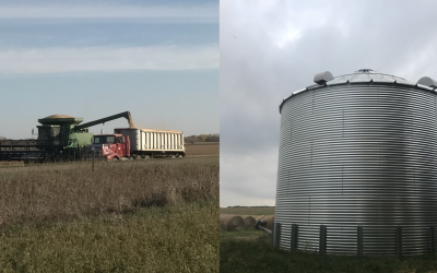 two photos with a grain bin and a combine off loading onto a truck.