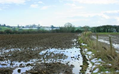 A wet, tilled field in early Spring with pools of water from melting snow