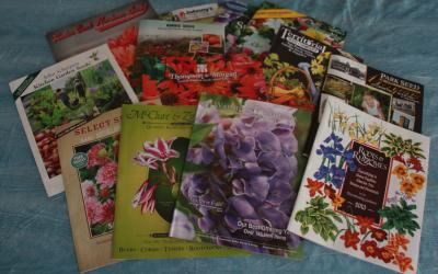 variety of garden catalogs laying on a blue background