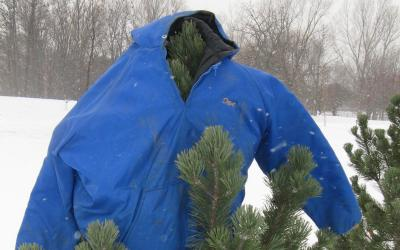 A blue coat placed atop a medium-sized evergreen tree in a snowy clearing