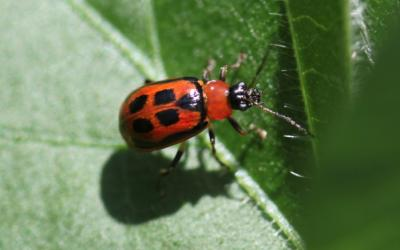 a small red bug on a green leaf