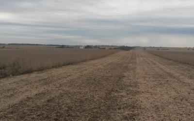 A large soybean field being harvested. About half the field is harvested.