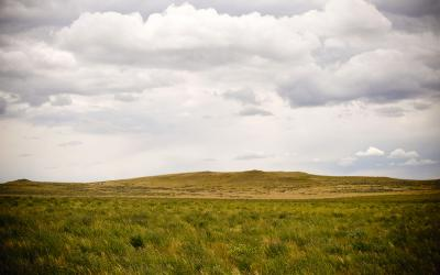 A vast, open rangeland with a few patches of weeds.