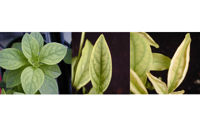 three separate images of green plants