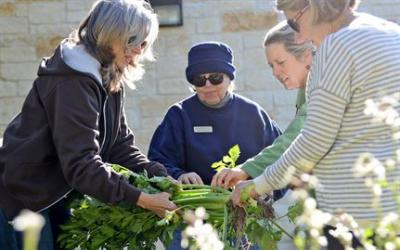 A group of master gardeners examining a plant.