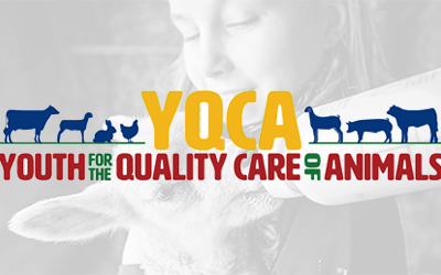 Youth For The Quality Care of Animals (YQCA) logo in front of a black and white image of a young girl feeding a small animal with a bottle