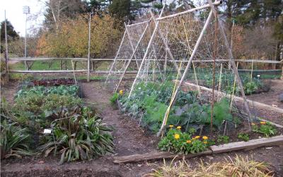 An organic garden with flowers, plants, land vegetables growing.