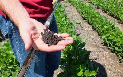 A hand holding a soil sample taken from a soybean field.