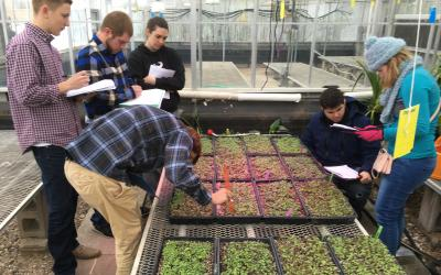 A group of people observing flats of microgreens in a greenhouse.