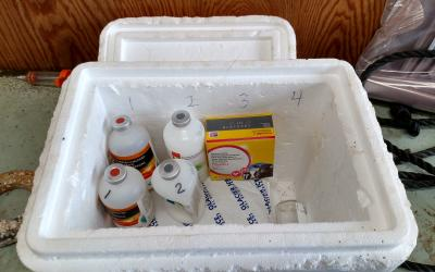 Labeled cooler and vaccines ready for anyone who is loading syringes.