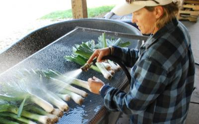 A woman rinsing vegetables off in an outdoor sink.
