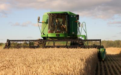 A green combine harvesting wheat.