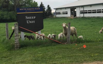 several sheep standing in a pen next to a sign