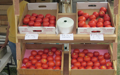 an image of fresh tomatoes