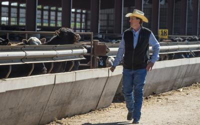 rancher observing cattle at a feedbunk
