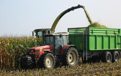 harvester chopping corn silage, depositing silage into green wagon.