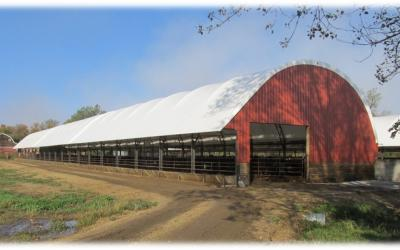 long, red, beef cattle feeding barn