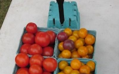 an image of red and yellow cherry tomatoes