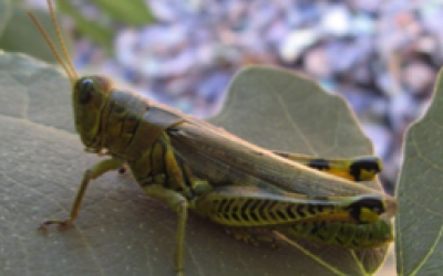 grasshopper sitting on plant leaf